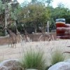 Brew at the Zoo Review